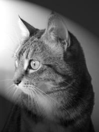 Girl Cat Dave 1