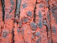Wooden texture 5