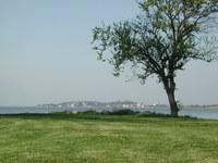 albero in riva al lago