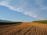 Fields in Arnex