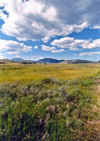 Green plains 2