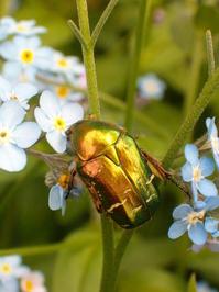 Insecte sur une fleur / Bug on a Flower