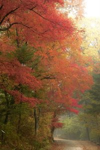 Autumn in Kwang Reung National Park