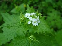 macro_flower 10
