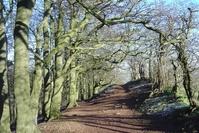 Wood & Trees 4