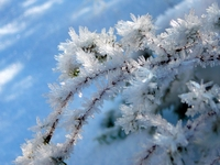morning frost 1