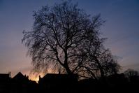Sunset trees 2