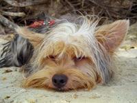My dog Ozzy