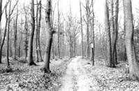 Taunus Forest 5