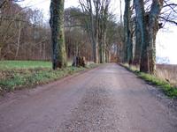 Alee road