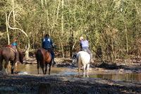 Horseman 1