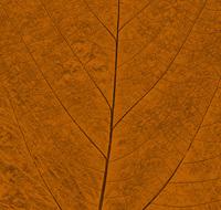 Pastel Leaf 7