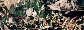 vegetal revolution 12