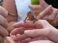 Chameleon lunch 2