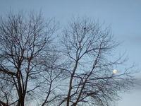 moon through tree