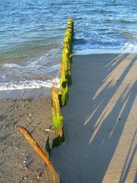 Old groyne on the beach