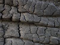 texture - burnt wood 2