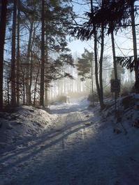 Winter-Impressionen 6