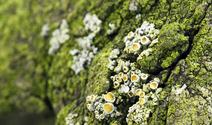 Green bark photo files