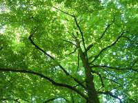 Green Green Tree