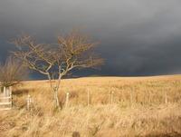Tree on a stromy photos