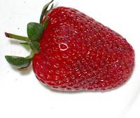 frutillas 3