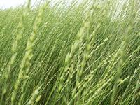 Road Grass
