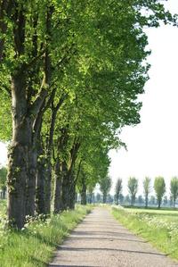 Trees along narrow road in Ammerzoden