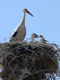stork family 2