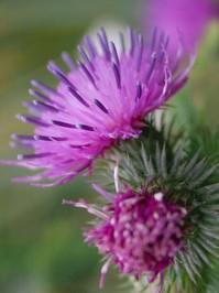 wild flowers 13
