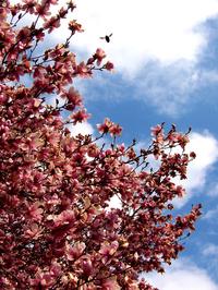 Magnolia Bee