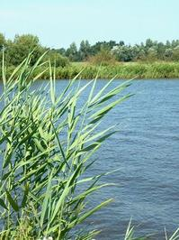 Water with gras
