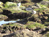Birds on the rocks 2