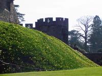 British Castle 1