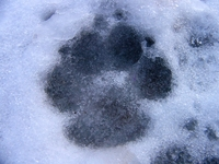Dog-gone winter