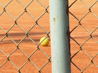Tennis Ball Behind a Fence