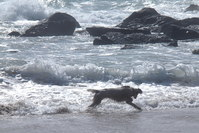 Sea Dog 1