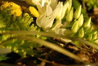 eggs between flowers