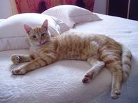 Kitten's rest
