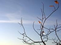 Crystal drop on tree 1