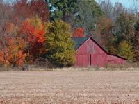 Fall in Indiana 2