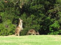 Kangaroo fmaily