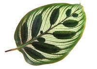 Leaf 107