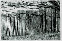 wood walk 3