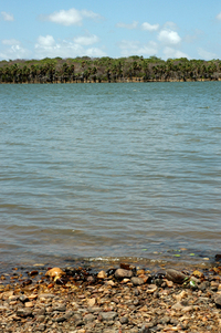 river sao goncalo