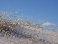 Hairy Sand