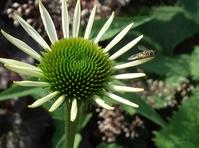 Green flower... 5