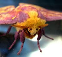 The moth 2