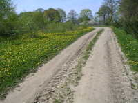 dirt-track 1