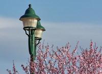 lantern and spring